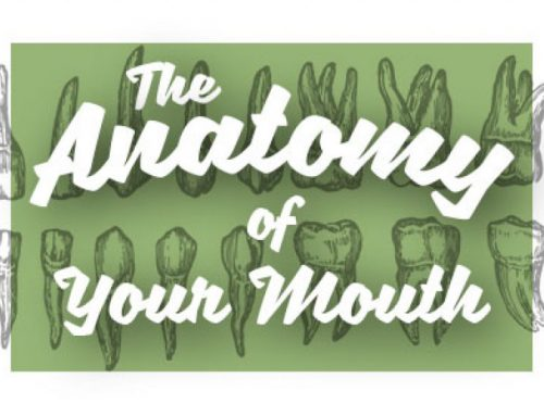 Oral Anatomy 101